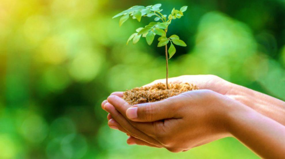 मुख्यमंत्री ने विश्व पर्यावरण दिवस पर मेघालय में वन सिटीजन वन ट्री अभियान चलाने का लिया निर्णय
