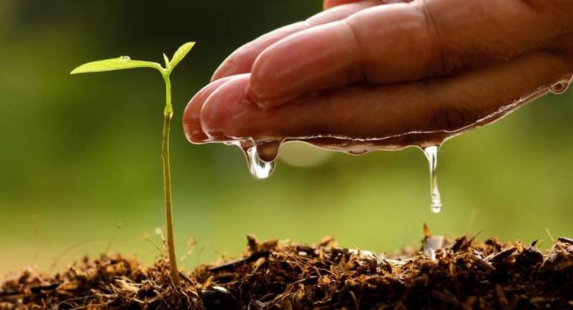 असम सरकार के विज्ञान और तकनीकी विभाग ने प्रशासन के साथ मिल कर मनाया पर्यावरण दिवस